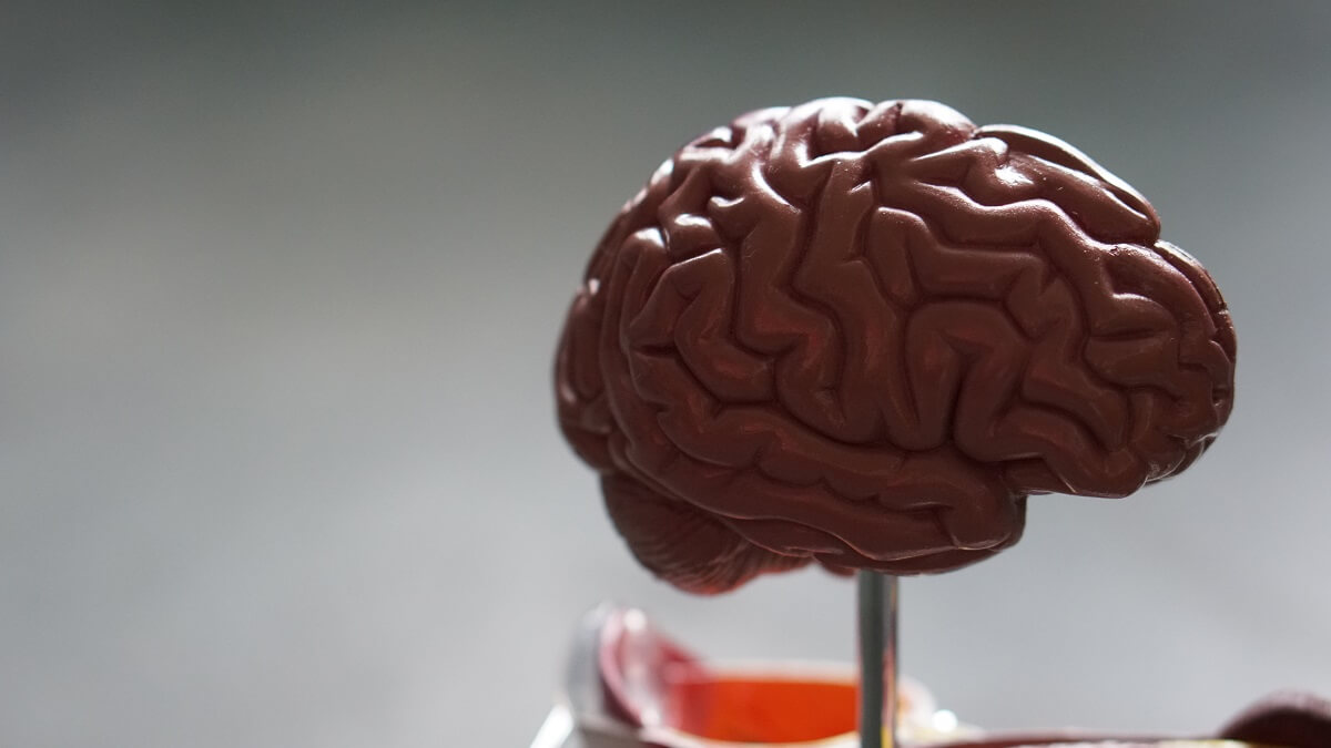 Using our Brain in a World of Information and Technology