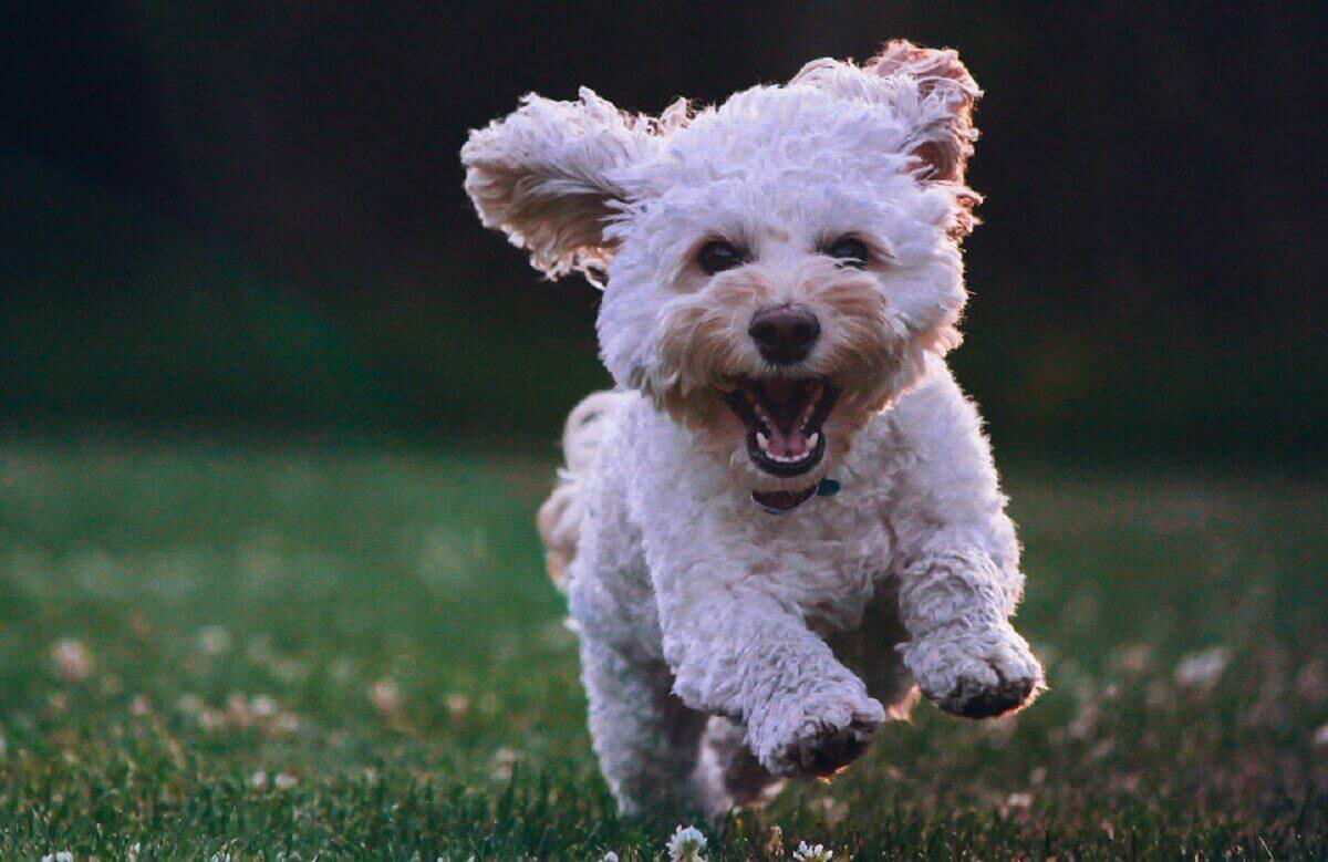 Dog giving joy